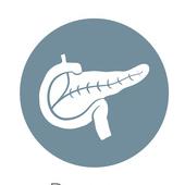 Icon Pankreas